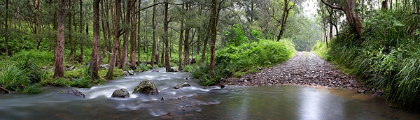 condamine river rainforest creek