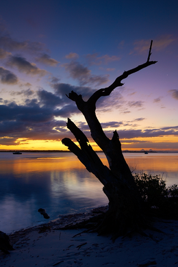 Preview for Bribie Silhouette