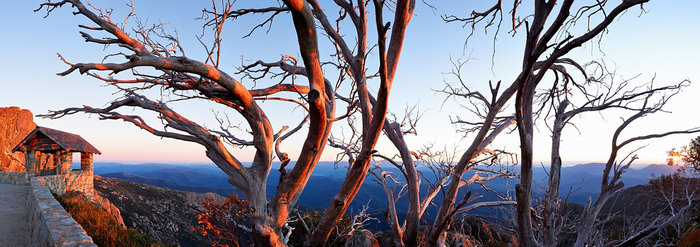 Snow Gums at The Horn
