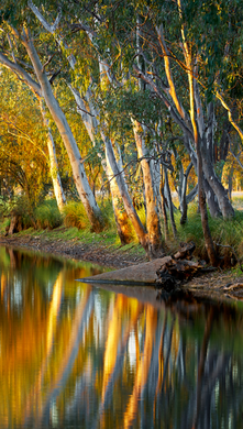 Preview for River Gums