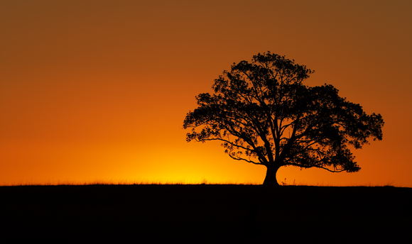 Preview for The Sunset Tree